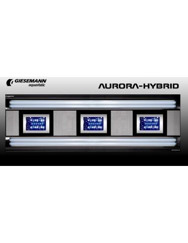 Giesemann Aurora Hybrid